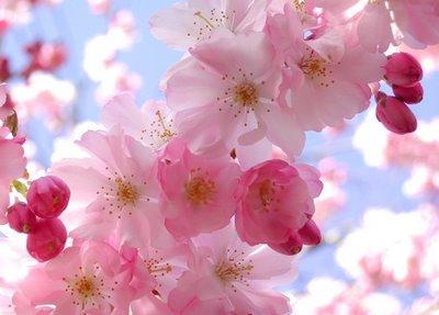 primavera primavera